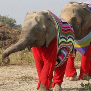 Inde: ouverture du premier hôpital spécialisé pour les éléphants